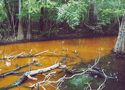 Material flow to Waccamaw River