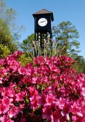 bell tower with azaleas